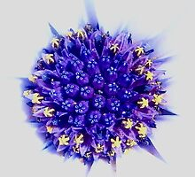 Purple insides by BluMantis