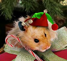 Christmas Elf Hamster by jkartlife