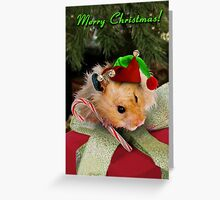 Christmas Elf Hamster Greeting Card