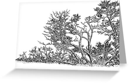 Trees graphic drawing by antkevyv