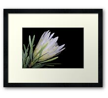Looking Good In White Framed Print