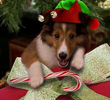 Christmas Elf Sheltie by jkartlife