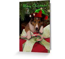 Christmas Elf Sheltie Greeting Card