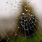 Imagine a multidimensional spider's web... by Gregoria  Gregoriou Crowe