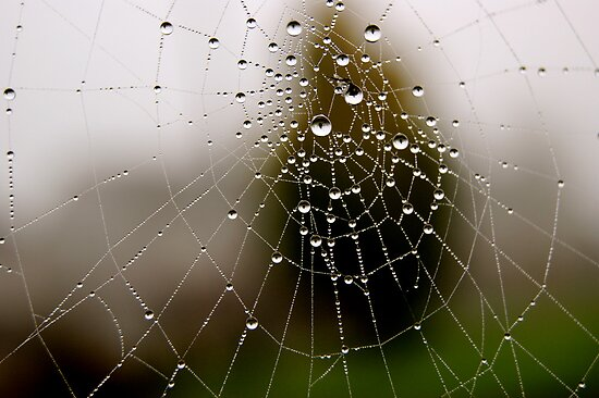 Imagine a multidimensional spider's web... by Gregoria  Gregoriou Crowe