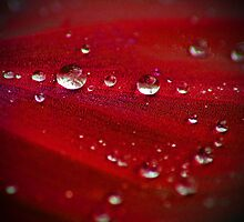 Droplets by Melissa-Louise