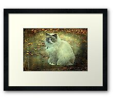 """""""But Mama ! ...It is so Cold Outside !"""" Framed Print"""
