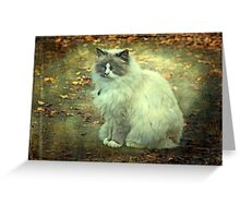 """""""But Mama ! ...It is so Cold Outside !"""" Greeting Card"""