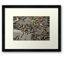 Spent cartridge shells on ground in Vietnam Framed Print