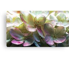 Hydrangea Blossoms Canvas Print