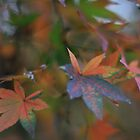Autumn Leaves by Graham Lawrence