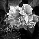 Black and White by Margaret  Shark