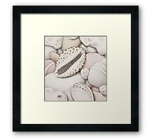 Pebbles, Cowrie & Abalone Shells Framed Print