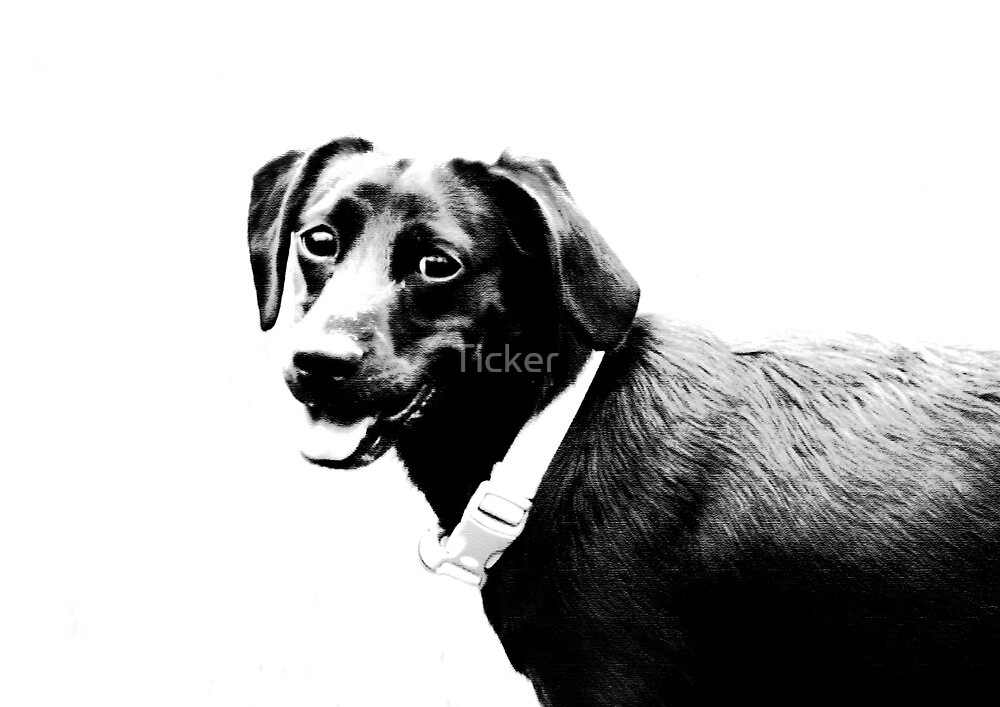 Dog Portrait by Ticker