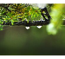 Double Drop Photographic Print