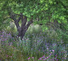 Beneath The Olive Tree by geoff curtis