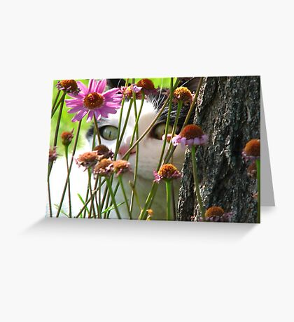 Hiding in the Daisies Greeting Card