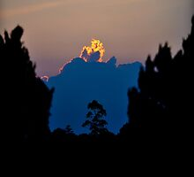 Tall tree silhouetted against huge cloud aflame with light from the setting sun. by Sheldon Levis