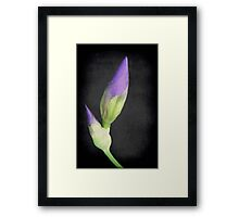 Popping Up Irises ©  Framed Print