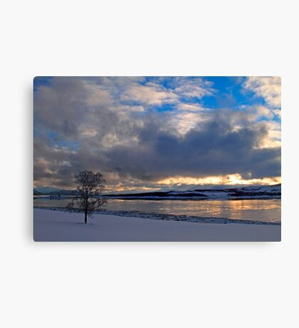 Winter tree-III Canvas Print