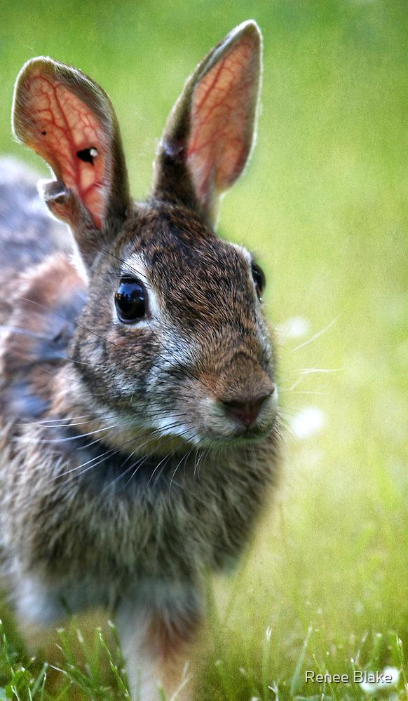 Mr. Raggedy Ear by Renee Blake