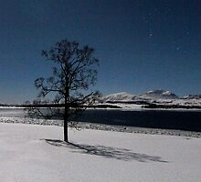 Winter tree-IV by Frank Olsen