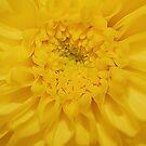 Yellow Flower - Bright  by Kerensa Davies