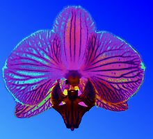 psychedelic exotic orchid by patjila