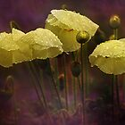 Flowers in the Rain by hampshirelady