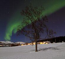 Winter tree-V by Frank Olsen