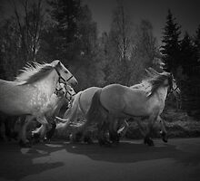 the queen's horses by Dorit