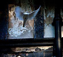 Dove Taking Flight by Tim Foster