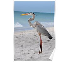 GREAT BLUE HERON CAPTIVA FLORIDA Poster