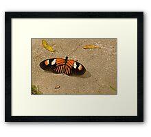 Doris longwing butterfly Framed Print