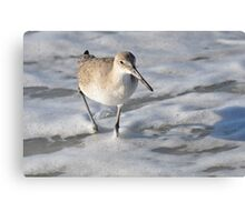 SHOREBIRD CAPTIVA Canvas Print