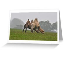 Bactrian Camels  Greeting Card