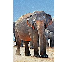 Painted Elephant in the Desert Photographic Print