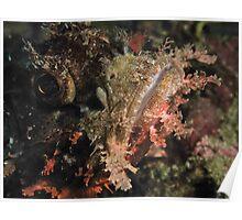 Scorpionfish close up, Lembeh Poster