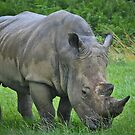 Two Horned Rhinoceros with Green Grass by Dhruba Tamuli