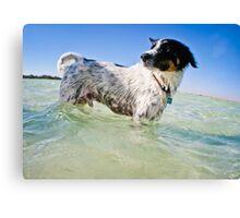 A salty sea dog.... Canvas Print