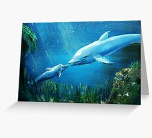 dolphin & baby Greeting Card
