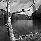 Spring Mountain Lake by Susan R. Wacker