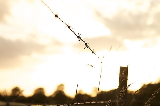 Barbed Wire by Tim Foster