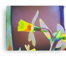 Artistic Daffodils 5 Canvas Print