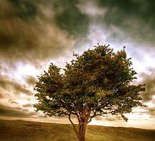 Devils Tree by mottyg