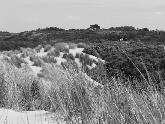 mono dune view by LisaBeth