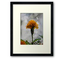 It's a flower... ©  Framed Print