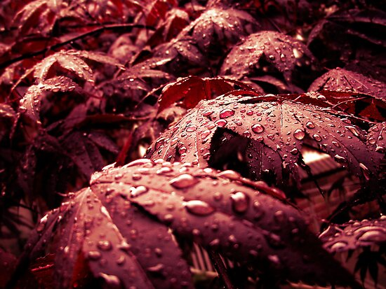 After - rain of the mourning sun by njumer