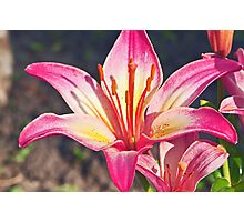 Red And White Lily Photographic Print