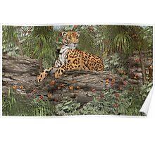 Jaguar on the Rocks Poster